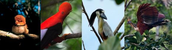 Aves -  Peru A Travel.jpg