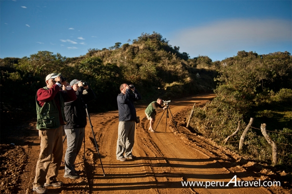 Birdwatchin Peru A Travel 4.JPG