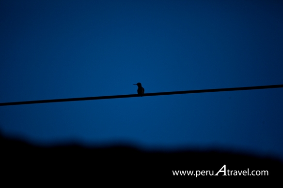 Birdwatchin Peru A Travel 6.jpg