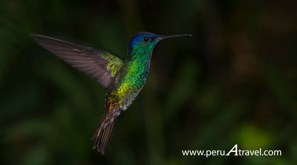 Birdwatchin Peru A Travel.JPG